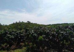 (出售) 海南省定安县龙门镇有农村土地77亩转让